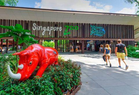 Достопримечательность Сингапура — городской зоопарк