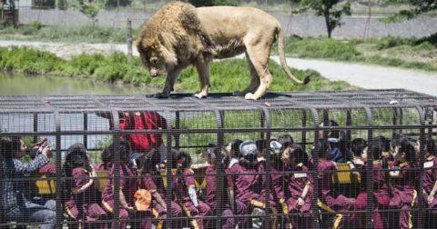 Необычный зоопарк, где люди сидят в клетках