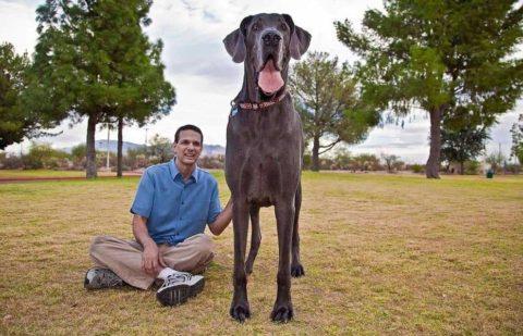 Самая большая собака на земле