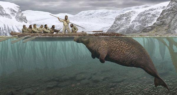 Стеллерова морская корова истреблена в конце XVIII века