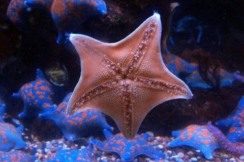 Красивые морские звезды
