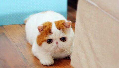 Коты правят интернетом или кот взорвавший интернет