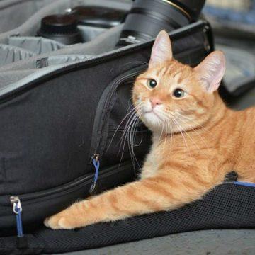 Кот с косыми глазами Джарвис