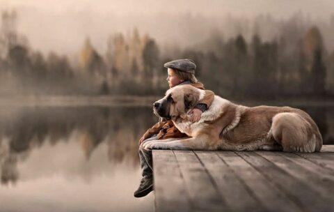 Большая собака алабай