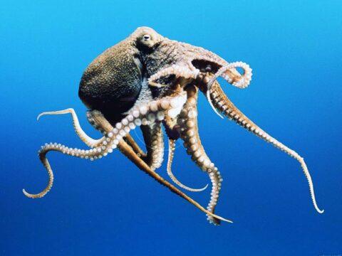 Особенность глаз головоногих моллюсков