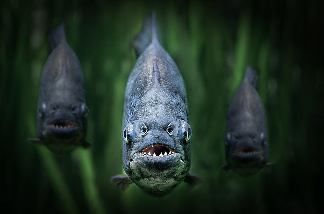 картинки про хищных рыб растением